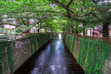 Meguro River in summer