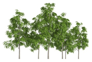 Trees in a row isolated on white 3d illustration