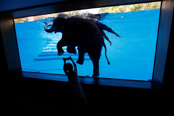 A girl takes a picture while an elephant and its mahout swim at Khao Kheow Zoo in Chonburi, outside Bangkok