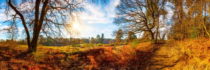 Landschaft im Herbst mit Bäumen und Sonne
