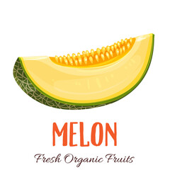 Vector melon illustration