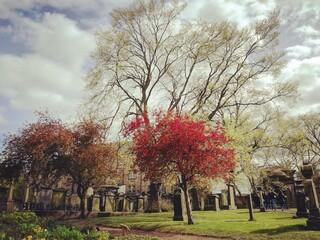 Paisaje otoño urbano con árboles con hojas de colores