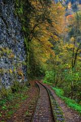 Railroad tracks cut through autumn woods