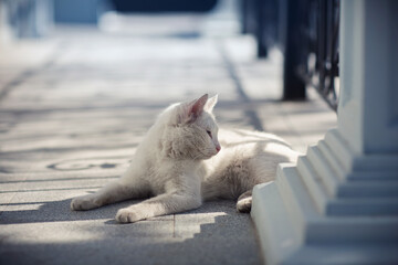 white cat is basking in the sun