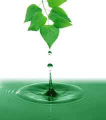 Green Leaves Above Water