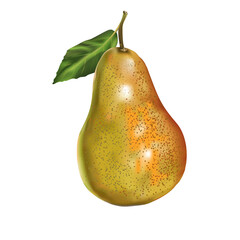 Pear realistic. Vector  Illustration