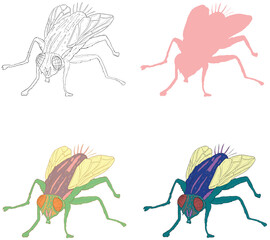 Collection of Fly Illustration Vectors