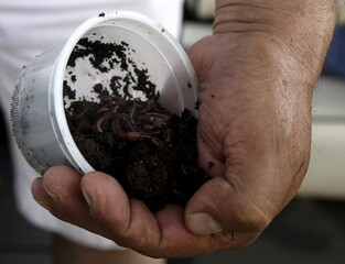 Fisherman holds a container of earthworms as he takes part in the Copa Hermandad  international fishing competition in Asuncion, Paraguay