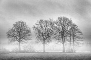 A group of trees with picturesque effect black and white