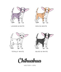 Vector editable colorful image depicting a cute chihuahua puppy dog. Isolated on a white background. A set of four colors chihuahua dog types.