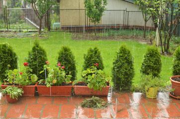 Hard rain falling in a garden on flower pots and a lawn