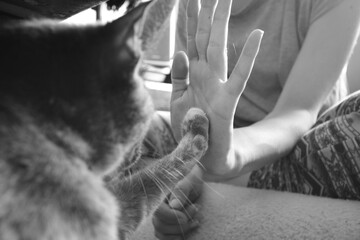 Cat and woman hand touching - paw, contact, sweet, love, animals, friendship