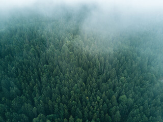 Aerial Drone photo of lake Eibsee with forest in Germany