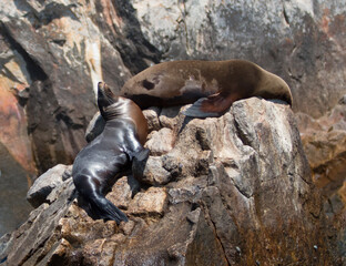 Two Sea Lions lazing on Pinnacle rock at Lands End in Cabo San Lucas Baja Mexico BCS