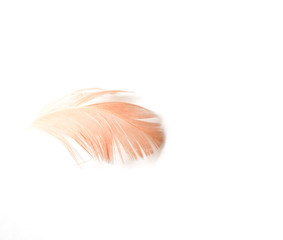 Feather White Isolated