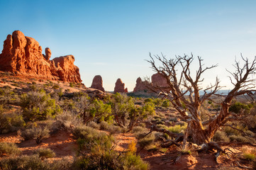 Dormant tree in front of the natural monuments in Arches National Park, Utah, USA.