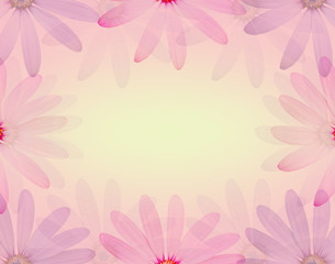 Colorful daisy flower in soft sweet color and blur style texture background