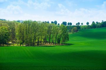 Beautiful green field summer landscape