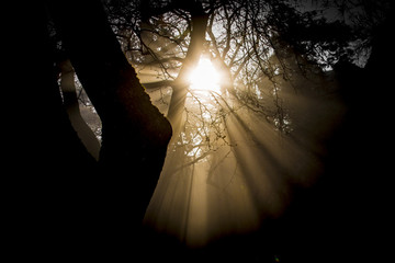 Trees and sunrays