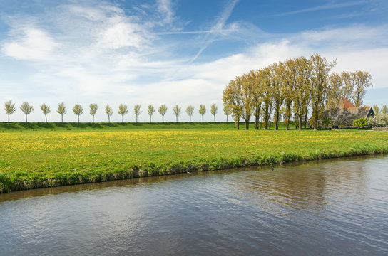 Dike with a row of trees and farmhouse in the Beemster Polder