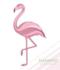 Flamingo. Silhouette of flamingos. A tropical bird. Vector illustration. Logo.