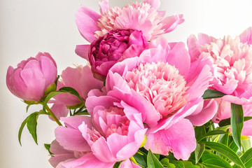 Peony flowers bouquet. Springtime fresh natural composition