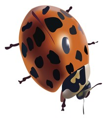 Ladybug isolated vector on a transparent background.