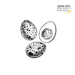 Vector hand drawn set of farm products. Isolated quail boiled egg. Engraved art. Organic sketched farming meal.
