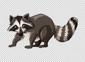 Wild raccoon on transparent background