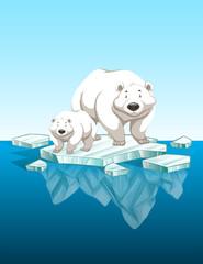 Mother polar bear and cub on ice