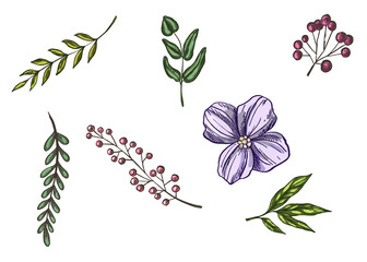 Realistic flowers and leaves hand drawn. Colorful vintage style illustration.