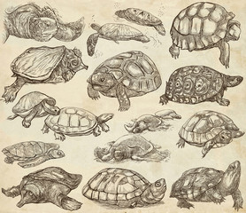 Turtles - collection of hand drawings, freehand sketches on old paper.