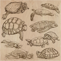 Turtles - An hand drawn vector collection. Tortoise. Set of hand drawings. Line art.