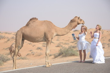 Women feeding camel