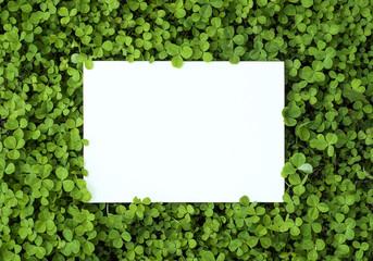 Summer green frame of grass