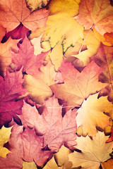 Autumn leaves background in vintage style autumn concept