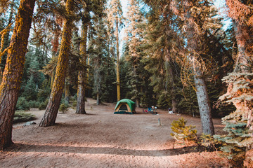 Camping Spot in the Middle of Forest