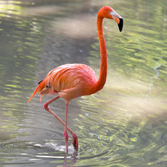 In de dag Flamingo Pink flamingo on a pond in nature
