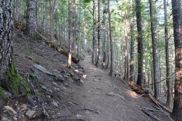 Hiking trail in a coniferous forest, near Portland Oregon