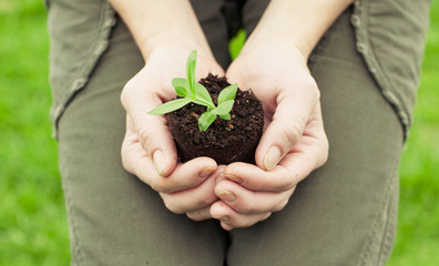 Female hands hold a young plant on background of a green grass. New life concept
