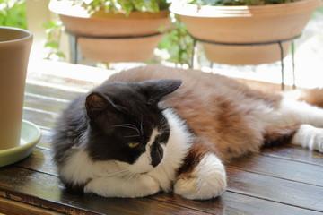 縁側で眠そうな野良猫
