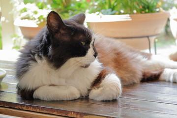 縁側でくつろぐ野良猫
