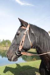 Pferdekopf und Reiter im Schatten 2