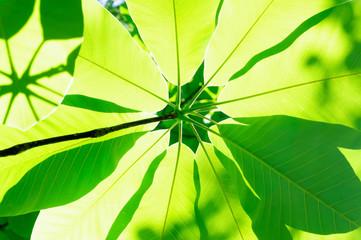 光あふれる新緑