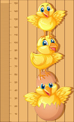 Growth chart ruler with little chicks