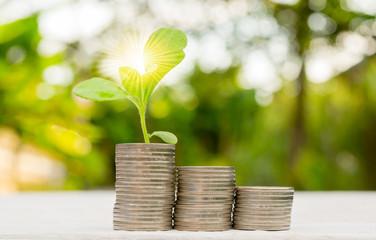 Interest money finance Plant Growing In Savings