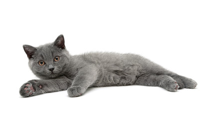 Kitten isolated on white background.