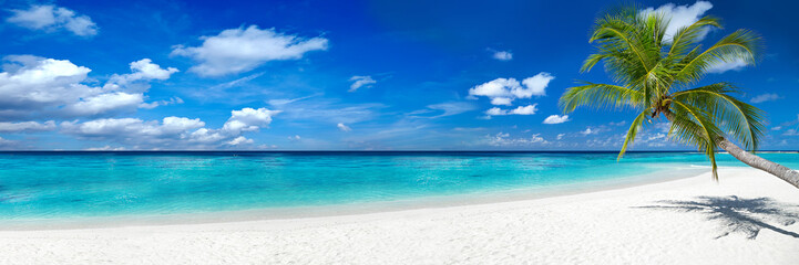Foto auf AluDibond Strand coco palm panorama super wide format on tropical paradise dream beach