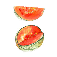 The magenta melon isolated on white background, watercolor illustration fruit set in hand drawn style.