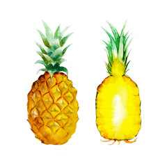 The pineapple isolated on white background, watercolor illustration fruit set in hand drawn style.